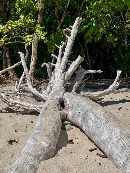 Anatomically correct driftwood